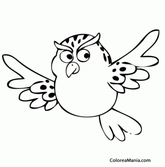 Colorear Bho volando Aves dibujo para colorear gratis