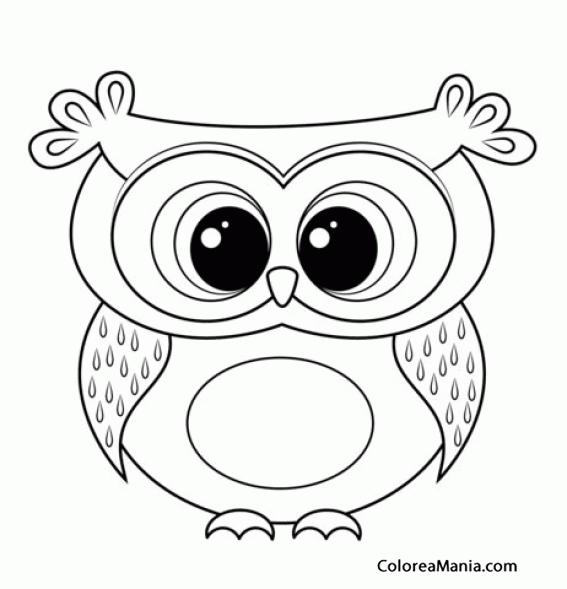 Colorear Buho. Owl. Hibou. Mussol. Gufo (Aves), dibujo para