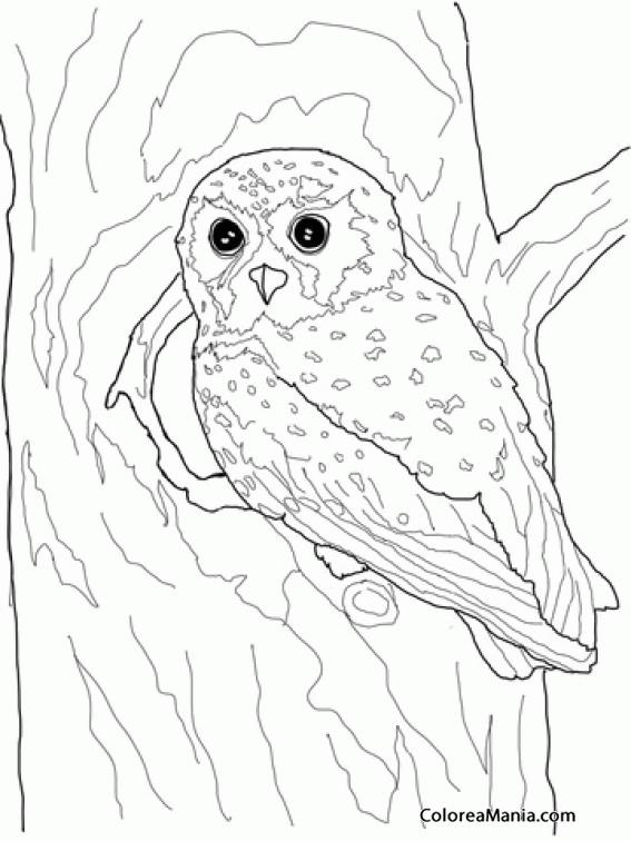 Colorear Búho Entrando En Nido Aves Dibujo Para Colorear
