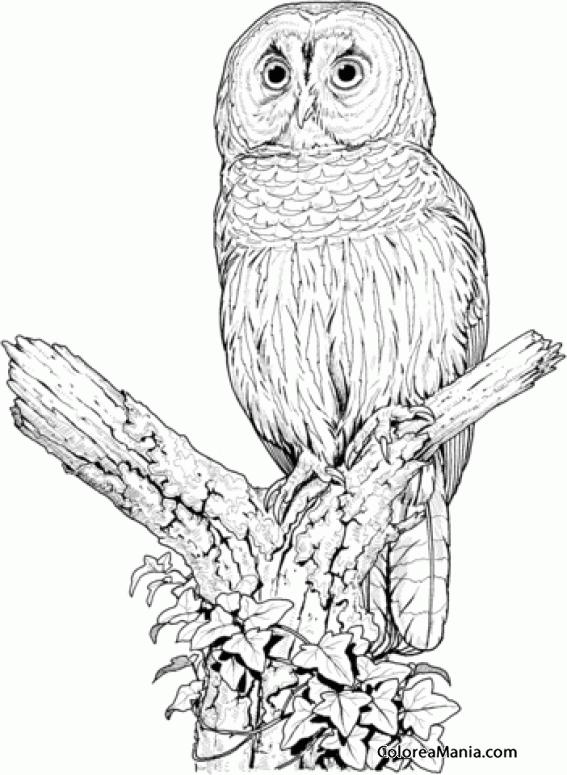 Colorear Bho en el desierto 2 Aves dibujo para colorear gratis