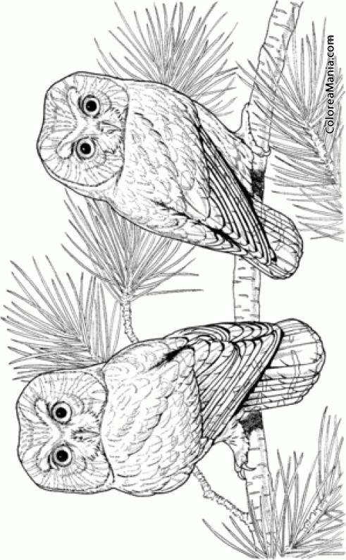 Colorear 2 Búhos En Un Pino Aves Dibujo Para Colorear Gratis
