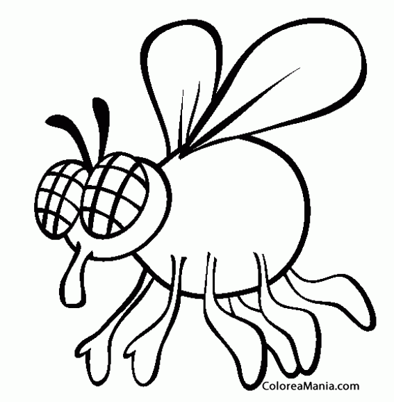 house fly coloring pages - photo #21