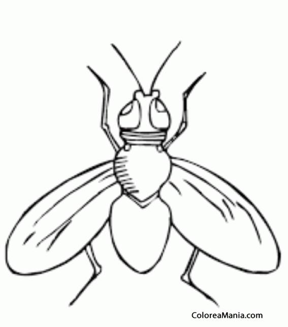 Colorear Mosca alas abiertas Insectos dibujo para colorear gratis