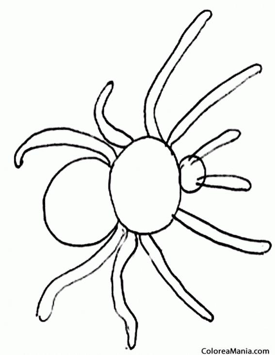 Colorear Araña Simple Insectos Dibujo Para Colorear Gratis