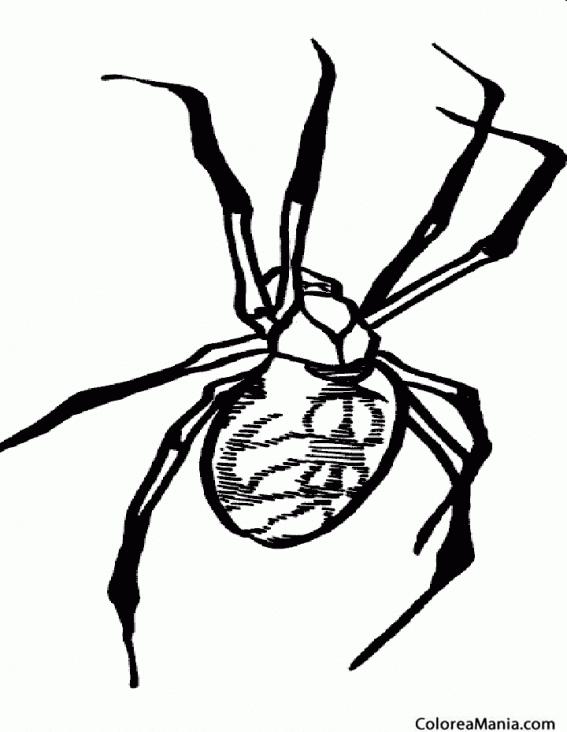 Colorear Araña viuda negra (Insectos), dibujo para colorear gratis