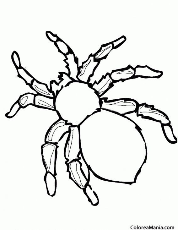 Colorear Araña Seda Dorada Insectos Dibujo Para Colorear