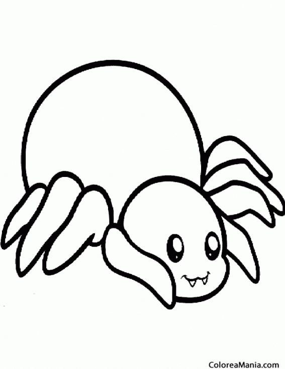 Colorear Araña Pequeña Insectos Dibujo Para Colorear Gratis