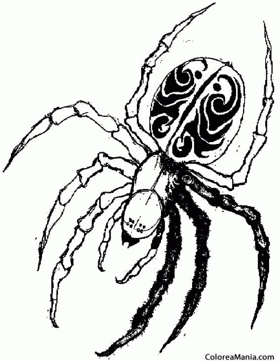 Colorear Araña viuda negra 2 (Insectos), dibujo para colorear gratis