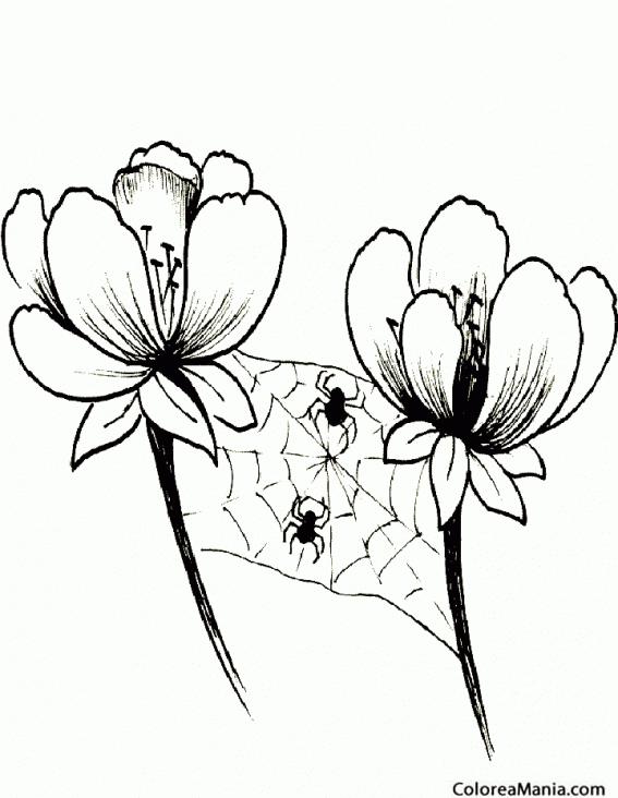 Colorear Araña tejiendo entre flores 2 (Insectos), dibujo para ...