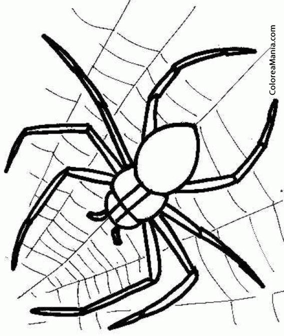 Colorear Araña Spider Aranya 3 Insectos Dibujo Para
