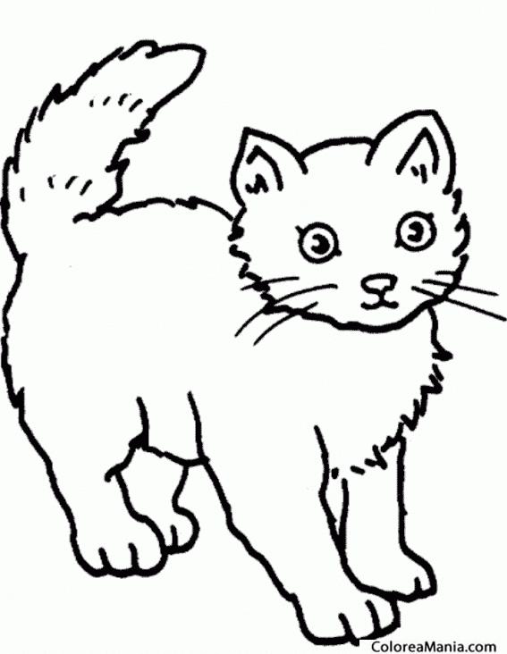 Colorear Gato De Pie Animales Domésticos Dibujo Para Colorear Gratis