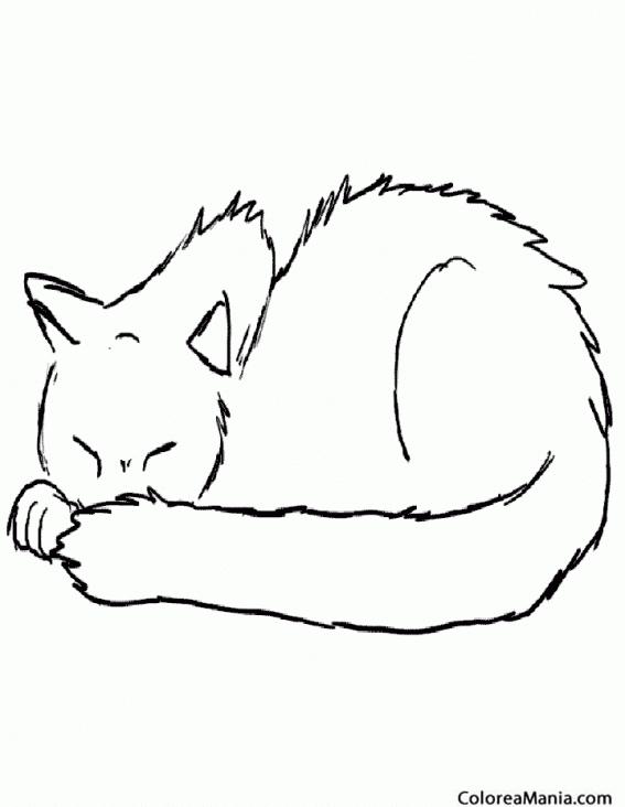 Colorear Gato Dormido Animales Domésticos Dibujo Para Colorear Gratis