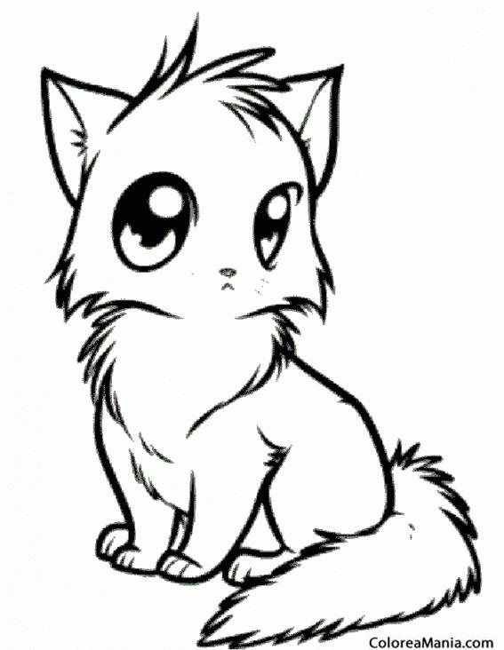 Colorear Gato de grandes ojos Animales Domsticos dibujo para