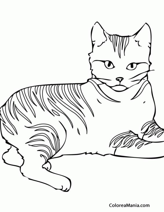 Colorear Gato atigrado 2 (Animales Domésticos), dibujo para colorear ...