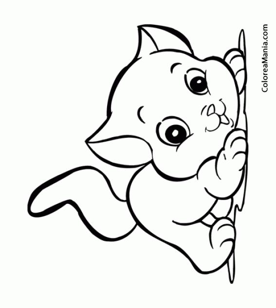 Colorear Gato Jugueton Infantil Animalitos Dibujo Para