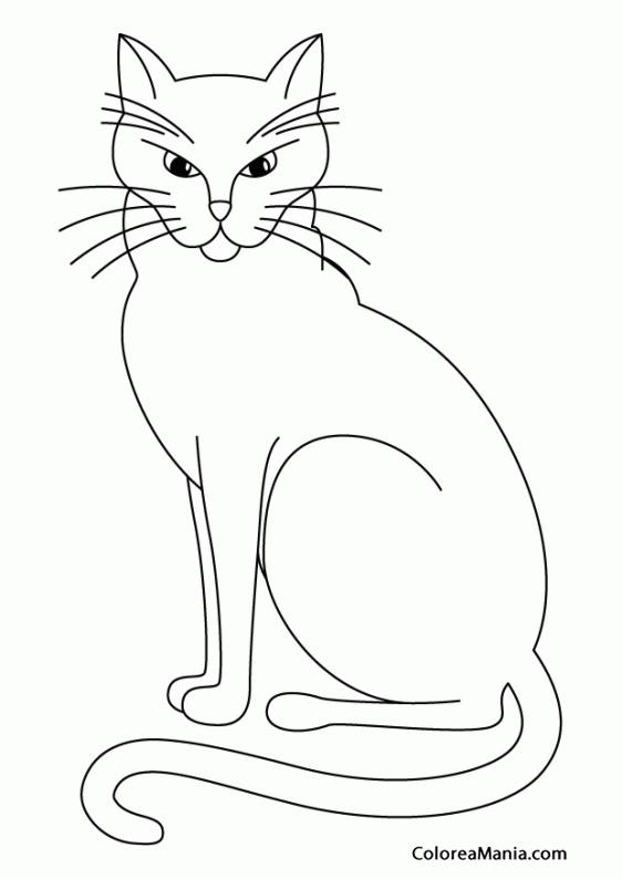 Colorear Gato esfinge (Animales Domésticos), dibujo para colorear gratis