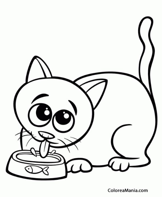 Colorear Gato Bebiendo Agua Animales Domésticos Dibujo Para