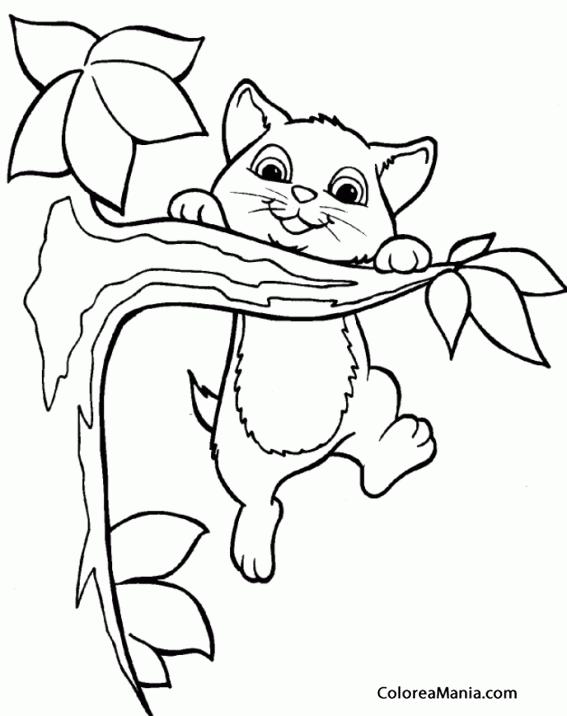 Colorear Gatito subiendo a un árbol (Animales Domésticos), dibujo ...