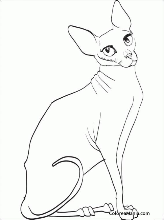 Colorear Gato Esfinge sentado (Animales Domésticos), dibujo para ...