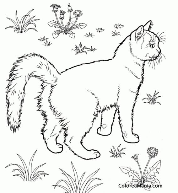 Colorear Gato Tabby en el campo (Animales Domésticos), dibujo para ...
