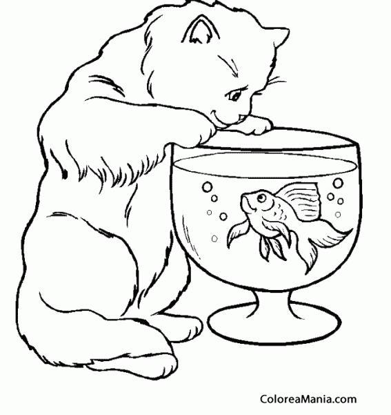 Colorear Gato Ante Pecera Animales Domésticos Dibujo Para