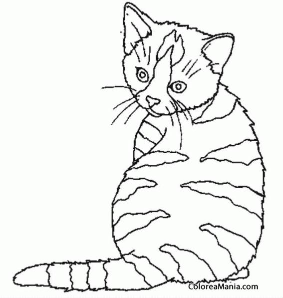 Colorear Gato atigrado de espaldas (Animales Domésticos), dibujo ...