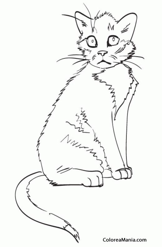Colorear Gato con cara triste (Animales Domésticos), dibujo para ...