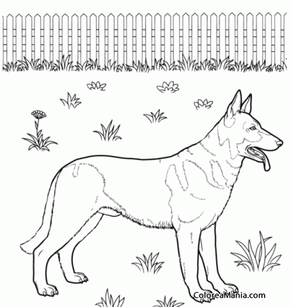 Colorear Perro Pastor Alemán de pelo corto (Animales Domésticos ...