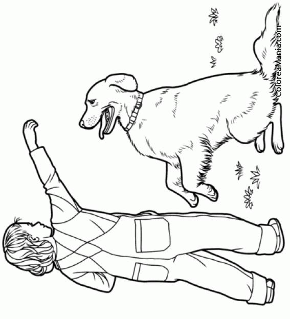 Colorear Perro Labrador retriever jugando con nio Animales