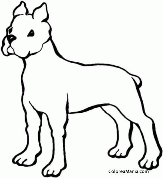 Colorear Perro Boxer Silueta Animales Domésticos Dibujo