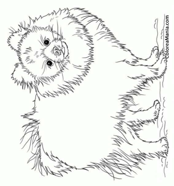Colorear Perro Pomerania de pie (Animales Domésticos), dibujo para ...