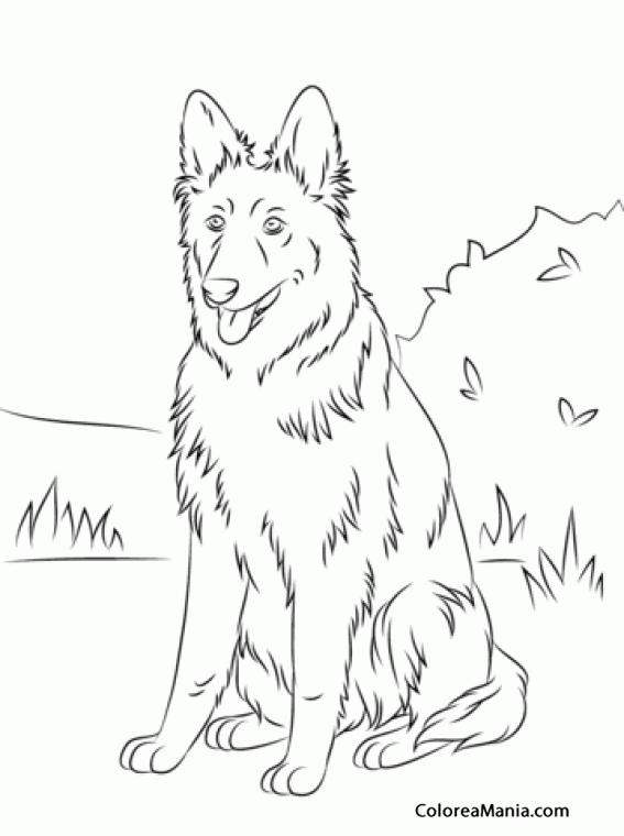 Colorear Perro Pastor Alemán sentado (Animales Domésticos), dibujo ...