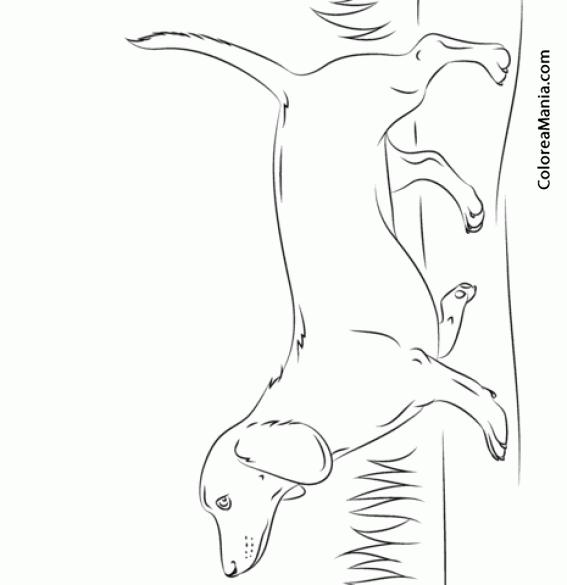 Colorear Perro Dachshund, Teckel o perro salchicha corriendo ...