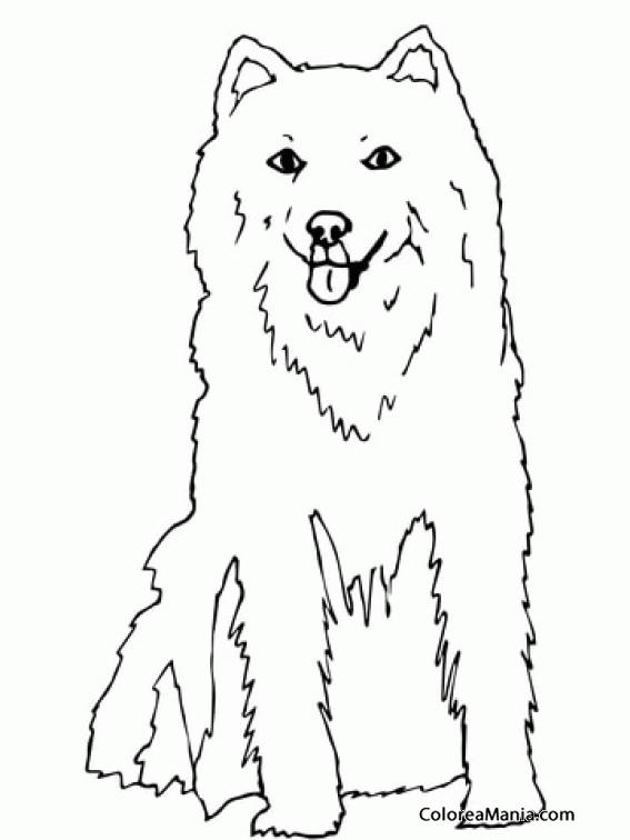 Colorear Perro Husky de Alaska (Animales Domésticos), dibujo para ...