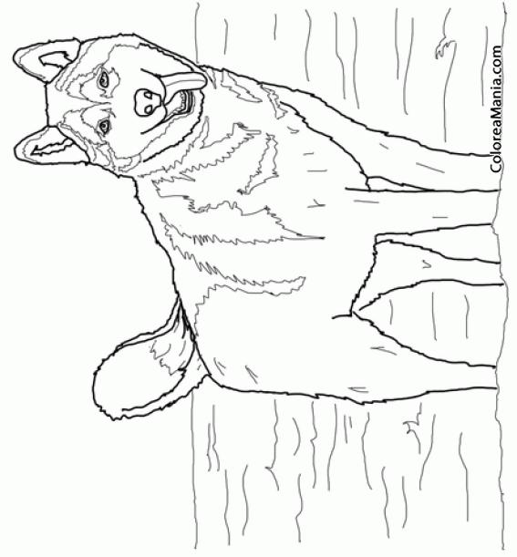 Colorear Perro Husky Siberiano (Animales Domésticos), dibujo para ...