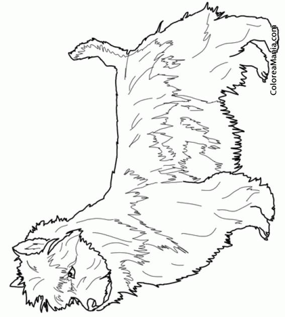 Colorear Perro Terrier de Australia (Animales Domésticos), dibujo ...