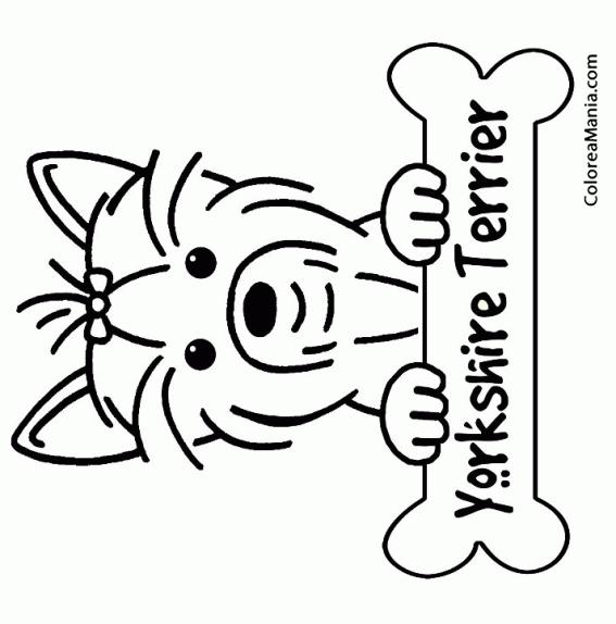 Colorear Perro Yorkshire Terrier o Yorkie con hueso tumbado