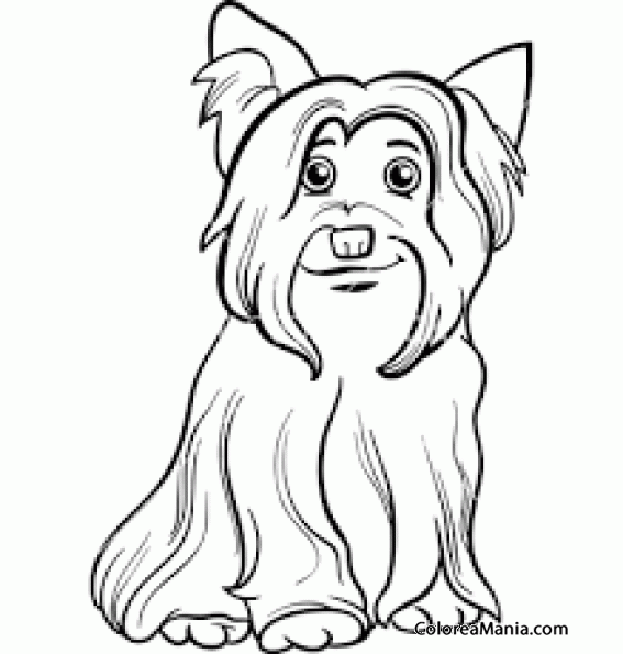 Colorear Perro Yorkshire Terrier o Yorkie con hueso tumbado 3