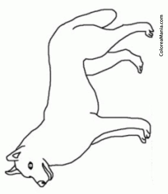 Colorear Silueta perro Siberian Husky (Animales Domésticos), dibujo ...