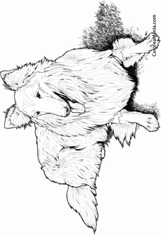 Colorear Perro Collie tumbado Animales Domsticos dibujo para