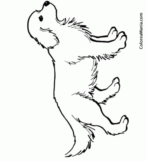 Colorear Cachorro Golden Retriever Animales Domésticos Dibujo