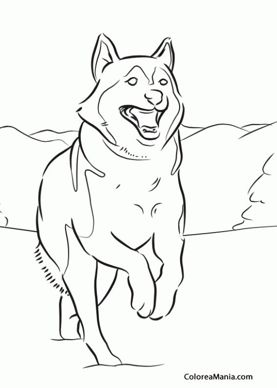 Colorear Perro Husky siberiano 2 (Animales Domésticos), dibujo para ...