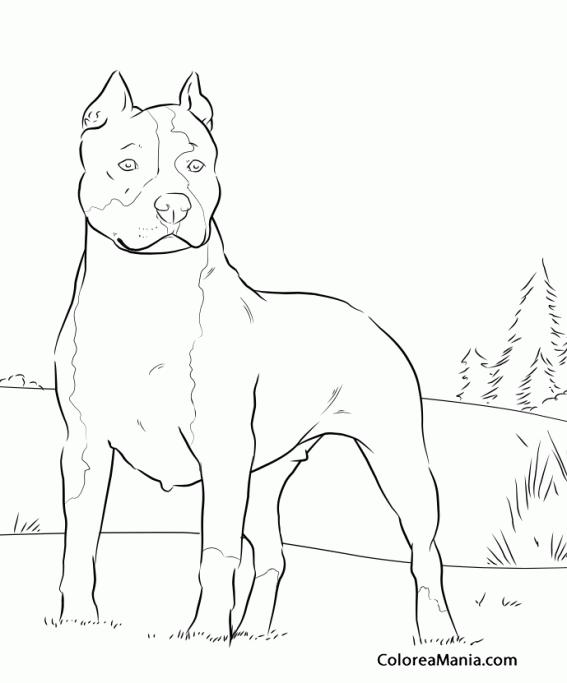 Colorear Perro American Pit Bull Terrier 2 (Animales ...