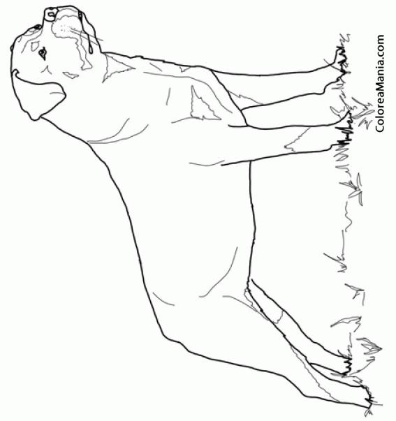 Colorear Perro Rottweiler 2 (Animales Domésticos), dibujo para ...
