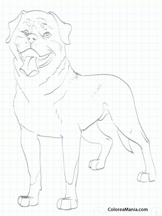 Colorear Perro Rottweiler sentado 2 (Animales Domésticos), dibujo ...