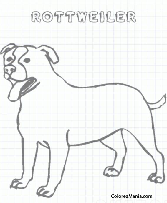 Colorear Perro Rottweiler 3 (Animales Domésticos), dibujo para ...
