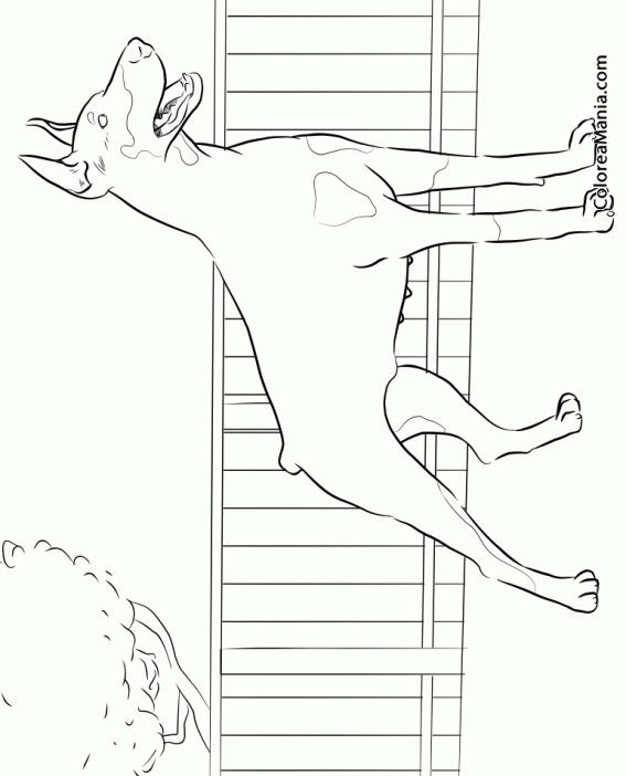 Colorear Perro Doberman Pinscher Animales Domésticos Dibujo Para