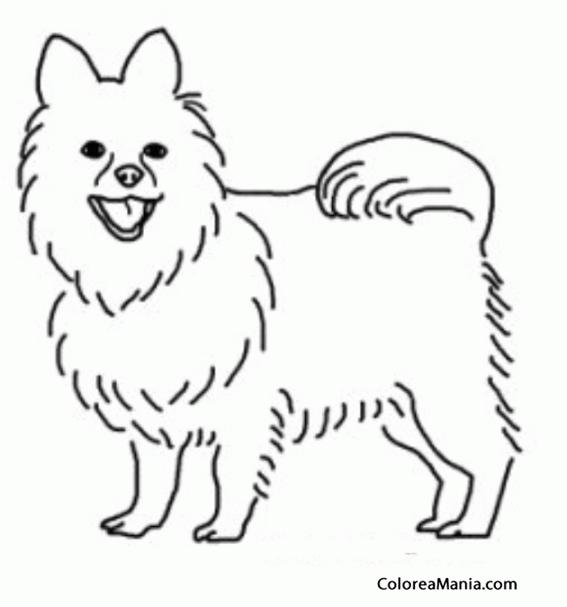 Colorear Silueta perro Pomerania (Animales Domésticos), dibujo para ...