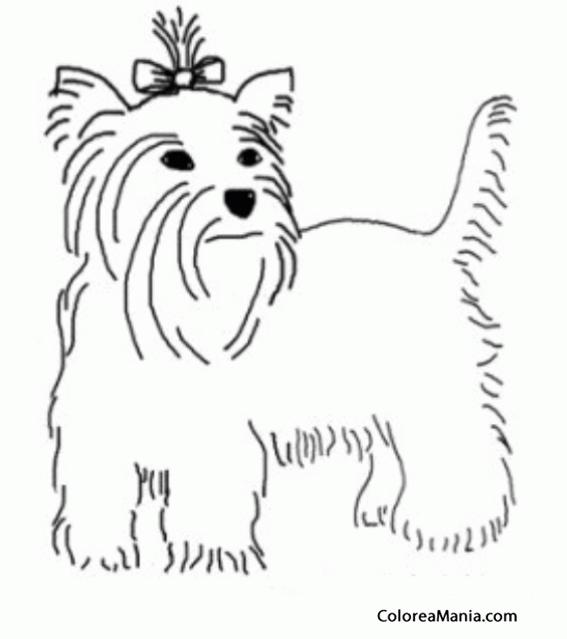 Top 10 Punto Medio Noticias Dibujos De Perros Yorkshire Para Colorear