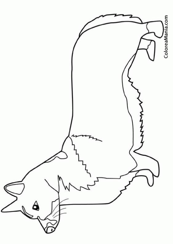 Colorear Perro Corgi Galés de Pembroke 3 (Animales Domésticos ...